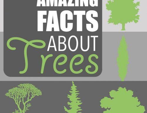 15 Interesting Tree Facts