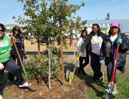 4 Simple Tips For Caring For Your Trees